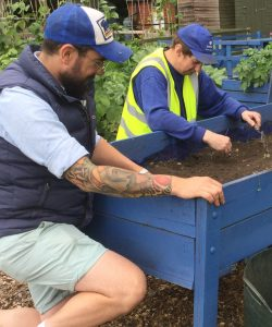Two men gardening at Henley Allotment, kneeling by a blue planter