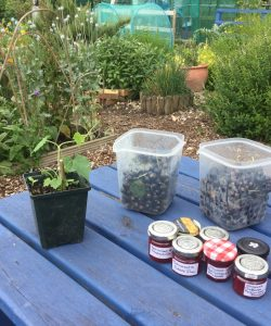 Harvested fruit and veg at Henley allotment